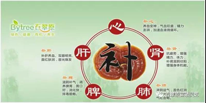 广州灵芝孢子粉